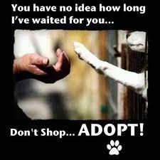 adoptme